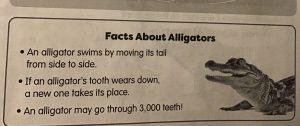 Daily word problems fun facts